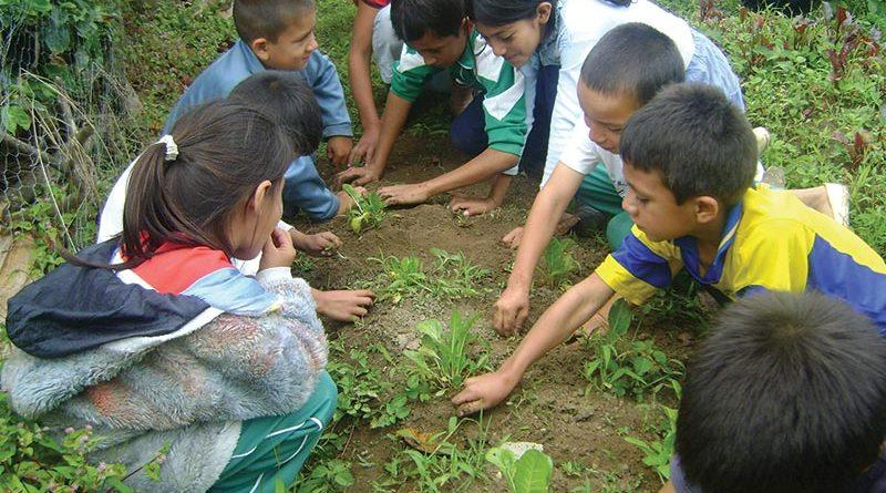 Una huerta en la escuela para estudiar las plantas