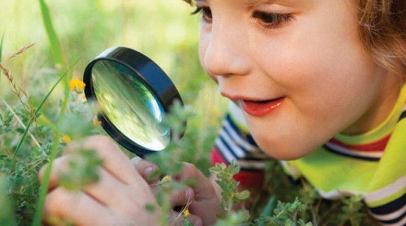 Investigando las plantas en Primer Ciclo