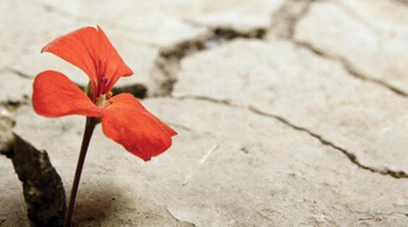Resiliencia: más que una palabra